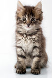 Piccolo gattino allegro Fotografie Stock Libere da Diritti