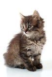 Piccolo gattino allegro Fotografia Stock Libera da Diritti