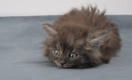 Piccolo gattino allegro fotografie stock