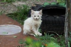 Piccolo gattino bianco che si siede su una plancia marrone nell'erba fotografia stock libera da diritti