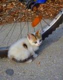 Piccolo gattino bianco dolce Fotografia Stock Libera da Diritti