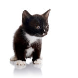 Piccolo gattino in bianco e nero Fotografia Stock Libera da Diritti