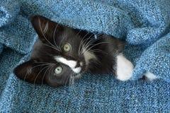 Piccolo gattino in bianco e nero dolce dei capelli di scarsità che dorme e che gioca in una coperta domestica blu Immagini Stock Libere da Diritti