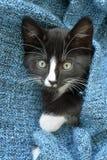 Piccolo gattino in bianco e nero dolce dei capelli di scarsità che dorme e che gioca in una coperta domestica blu Immagine Stock Libera da Diritti