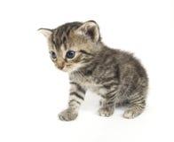 Piccolo gattino che gioca sulla priorità bassa bianca fotografie stock libere da diritti