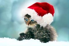 Piccolo gattino che porta il cappello di Santa Immagini Stock