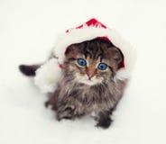 Piccolo gattino che porta il cappello di Santa Immagini Stock Libere da Diritti