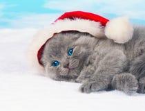 Piccolo gattino che porta il cappello di una Santa Fotografia Stock