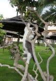 Piccolo gattino che scala un albero Fotografia Stock