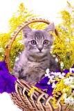 Piccolo gattino che si siede nel canestro con i fiori Fotografie Stock Libere da Diritti