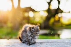 Piccolo gattino che si siede su un banco alla luce solare di estate Fotografia Stock