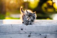 Piccolo gattino che si siede su un banco alla luce solare di estate Fotografie Stock Libere da Diritti