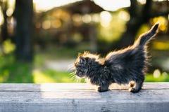 Piccolo gattino che si siede su un banco alla luce solare di estate Immagini Stock