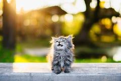 Piccolo gattino che si siede su un banco alla luce solare di estate Immagine Stock Libera da Diritti