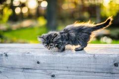 Piccolo gattino che si siede su un banco nei sunlights di estate Immagine Stock Libera da Diritti