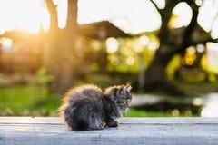 Piccolo gattino che si siede su un banco nei sunlights di estate Immagine Stock