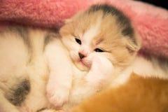Piccolo gattino che si trova in un canestro Foto casalinga, gattino a casa immagini stock