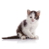 Piccolo gattino chiazzato adorabile Immagini Stock Libere da Diritti