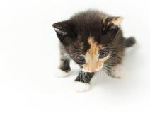 Piccolo gattino chiazzato in modo divertente Immagini Stock Libere da Diritti