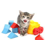 Piccolo gattino con i giocattoli Fotografie Stock