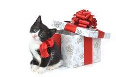 Piccolo gattino con il contenitore di regalo Immagine Stock