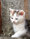 Piccolo gattino curioso del bambino immagini stock