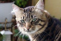 Piccolo gattino di Brown Fotografie Stock