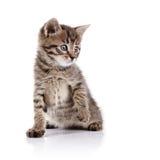 Piccolo gattino domestico adorabile a strisce immagine stock libera da diritti