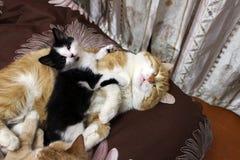 Piccolo gattino e grande gatto rosso fotografie stock