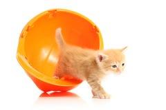 Piccolo gattino ed elmetto protettivo arancione fotografia stock