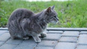 Piccolo gattino grigio si siede nel parco su un fondo di erba archivi video