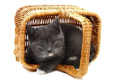 Piccolo gattino grigio in un cestino. Fotografie Stock Libere da Diritti
