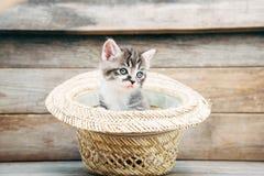 Piccolo gattino nel cappello fotografie stock
