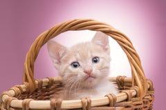 Piccolo gattino nel cestino fotografia stock