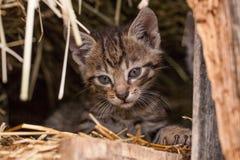 Piccolo gattino nel granaio fotografia stock libera da diritti