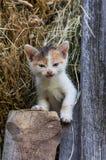 Piccolo gattino nel granaio fotografie stock