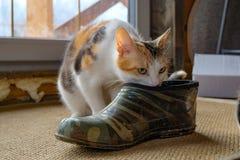 Piccolo gattino nella scarpa fotografia stock