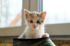 Piccolo gattino nella scarpa fotografie stock