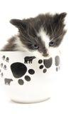 Piccolo gattino nella tazza. Fotografia Stock