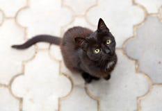 Piccolo gattino nero Fotografie Stock