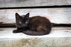 Piccolo gattino nero Immagine Stock Libera da Diritti