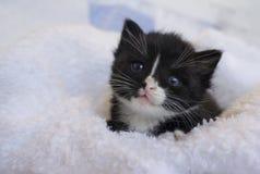 Piccolo gattino nero che rannicchia nelle coperte Fotografie Stock Libere da Diritti