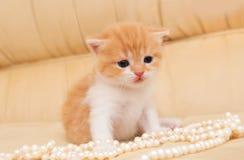 Piccolo gattino rosso Immagini Stock Libere da Diritti