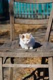 Piccolo gattino rosso su una sedia Immagini Stock