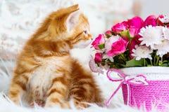 Piccolo gattino rosso sveglio e un mazzo immagini stock