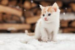 Piccolo gattino solo rosso su neve Fotografia Stock Libera da Diritti