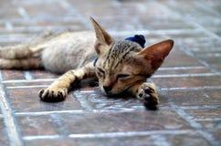 Piccolo gattino sonnolento immagini stock