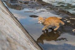 Piccolo gattino spaventato Immagini Stock Libere da Diritti