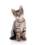 Piccolo gattino a strisce immagini stock libere da diritti