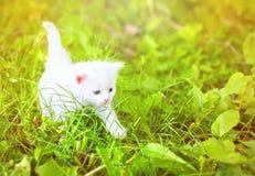 Piccolo gattino su erba Fotografie Stock